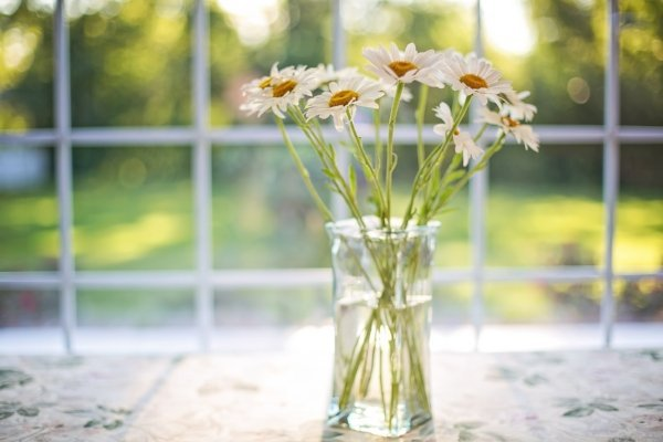 white daisies in a vase by a window